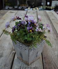松原園芸さんのビオラで寄せ植え - ヒバリのつぶやき