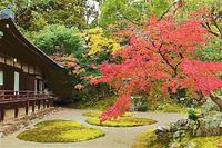 京都 醍醐寺の紅葉 4 - 光 塗人 の デジタル フォト グラフィック アート (DIGITAL PHOTOGRAPHIC ARTWORKS)