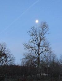 有明の月 - @ la pie.fr