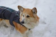 降りました、雪 - むーちゃんパパのブログ4