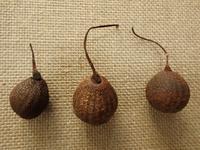『木の実図鑑4(ハンカチノキ・トチノキ・ツバキ・クヌギ・タイサンボク・ゴンズイ)』 - 自然風の自然風だより