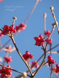 初春 - 一瞬をみつめて