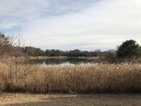 水鳥の池のほとりで静かなひととき。 - 白黒きんぎょの3狆ごよみ