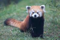 12月30日(日)「挑」 - ほのぼの動物写真日記