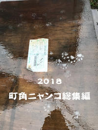 町角ニャンコ・2018総集編 - デジタルな鍛冶屋の写真歩記