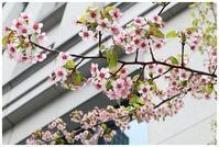 冬桜 -  one's  heart