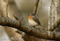 皆さん良いお年を(*^^*) - ケンケン&ミントの鳥撮りLifeⅡ