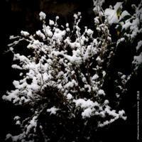 雪景色その3 - Illusion on the Borderline  II @へなちょこ魔術師