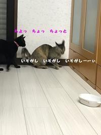 師走ですから - 八幡地域猫を考える会