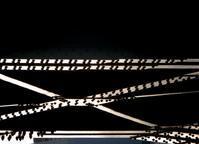 光蜥蜴 - はーとらんど写真感