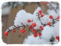 雪の被写体探し - キルトとステッチ時々にゃんこ