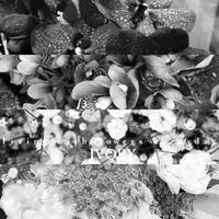 【年末年始の予定】 -  Flower and cafe 花空間 ivory (アイボリー)