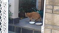 【猫】餌付け中 - 人生を楽しくイきましょう!