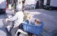 2018 「わん」ダフルなフォトライフ - 心のカメラ   more tomorrow than today ...