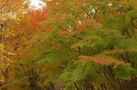 姫路城周辺にて(2018/11/18)其の⑤ - 南の気ままな写真日記