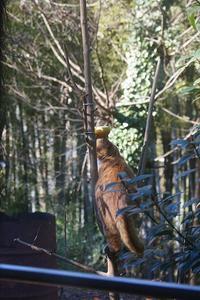 鳥を狙うムギちゃん - ネコと裏山日記