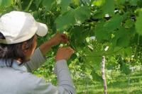 ご無沙汰しております、園主です。 - ~葡萄と田舎時間~ 西田葡萄園のブログ