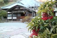 年の瀬の鎌倉 海蔵寺 - 木洩れ日 青葉 photo散歩