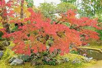 京都 醍醐寺の紅葉 6 - 光 塗人 の デジタル フォト グラフィック アート (DIGITAL PHOTOGRAPHIC ARTWORKS)