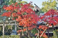 岡太神社の名残の紅葉@西宮市小松南 - たんぶーらんの戯言