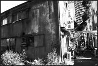 中野-10 - Camellia-shige Gallery 2