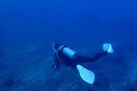 18.12.31大晦日、ブダイ祭り - 沖縄本島 島んちゅガイドの『ダイビング日誌』