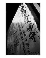 一陽来復 - ♉ mototaurus photography