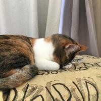 眠いね。 - ぶつぶつ独り言2(うちの猫ら2021)