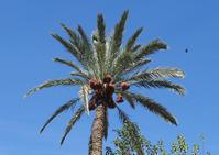 皆様・・・良いお年を! ~モロッコナツメヤシのある風景~ - 模糊の旅人