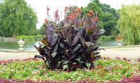緑いっぱいの心癒される広大な庭園・キューガーデン③@ロンドン・キューガーデン - カステラさん