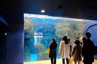 京都水族館③ - 平凡な日々の中で