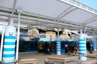 京都水族館② - 平凡な日々の中で