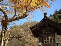 『岐阜公園の散策を今年の締めくくりにしました~』 - 自然風の自然風だより