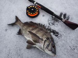 今年最後の釣り - A.サトの黒鯛BlogⅡ