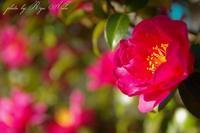 明けましておめでとうございます - Ryu Aida's Photo