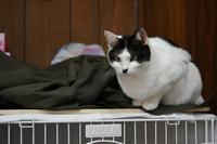 お正月も休まず営業致しますっ・第二弾!シロ子 - Black Cat Moan