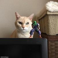 元日のポンコ - 賃貸ネコ暮らし|賃貸住宅でネコを室内飼いする工夫