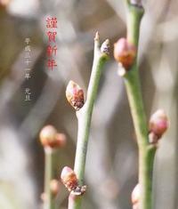 謹賀新年 - HAIKU/winter PHOTO