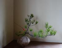 年始の花ー松を生ける - g's style day by day ー京都嵐山から、季節を楽しむ日々をお届けしますー