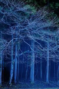 林の中で - 赤煉瓦洋館の雅茶子