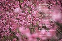 春 - 陽だまりの詩