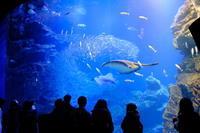 京都水族館④ - 平凡な日々の中で