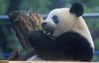 シャンシャン観察記歯を見てみよう - 動物園のど!
