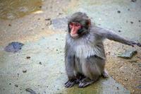 八木山動物園にキレキレのダンスをするサルがいました - 動物園のど!