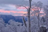 かすかな色合いの霧氷一ノ峠~天川辻 - 峰さんの山あるき