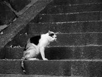 逃げるネコ - カメラノチカラ