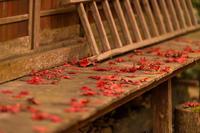 落紅葉 - 気ままにお散歩