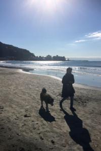 今年は、鎌倉を歩いて感じる時間を - パームツリー越しにgood morning        アロマであなたの今に寄り添うブログ