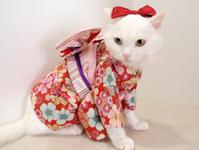 ボランティア10年 - 家なき猫