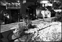 中野-11 - Camellia-shige Gallery 2